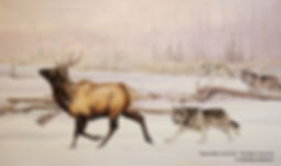 The Chase – Wolves and Elk, oil on canvas – All rights reserved © Monique Benoit