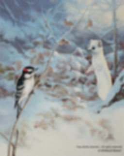 Surprise – Ermine and Downy Woodpecker, oil on canvas – All rights reserved © Monique Benoit