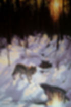 Winter Creek – Grey Wolves, oil on canvas – All rights reserved © Gisèle Benoit