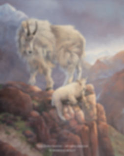 The Little Prince of the Rockies – Mountain Goats, oil on canvas – All rights reserved © Monique Benoit