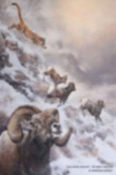 Stampede – Bighorn Sheep and Cougar, oil on canvas – All rights reserved © Monique Benoit
