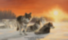 Blowing Snow – Grey Wolves, oil on canvas – All rights reserved © Gisèle Benoit