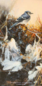 Bleu de glace, bleu de plume – Geai bleu en novembre, huile sur toile – Tous droits réservés © Gisèle Benoit