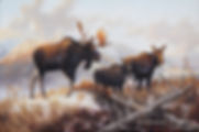 Brutus – Bull Moose with Cow and Calf, oil on canvas – All rights reserved © Gisèle Benoit