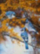 Murmurs in the Larch – Blue Jays, oil on canvas – All rights reserved © Gisèle Benoit