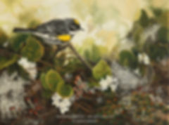 Paruline à croupion jaune et épigées rampantes, huile sur toile – Tous droits réservés © Gisèle Benoit