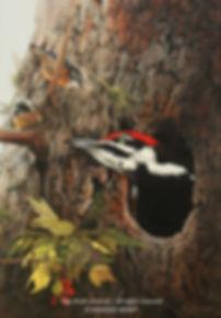 Qui est là? – Grand pic et sittelles à poitrine rousse, huile sur toile – Tous droits réservés © Monique Benoit