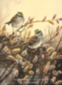White-throated Sparrows and Catkins, oil on canvas – All rights reserved © Gisèle Benoit