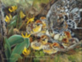 La mère attentive  – Gélinotte huppée et poussins, huile sur toile – Tous droits réservés © Monique Benoit