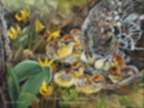The Caring Mother –  Ruffed Grouse and her Chicks, oil on canvas – All rights reserved © Monique Benoit