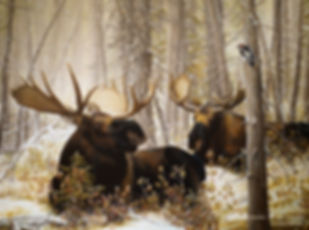Kings at Rest – Bull Moose and Downy Woodpecker, oil on canvas – All rights reserved © Gisèle Benoit