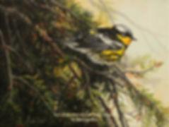 Paruline à tête cendrée, huile sur toile – Tous droits réservés © Gisèle Benoit