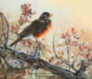 Hoarfrost in May – American Robin, oil on canvas – All rights reserved © Monique Benoit