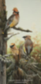 Les trois jaseurs – Jaseurs des cèdres, huile sur toile – Tous droits réservés © Monique Benoit