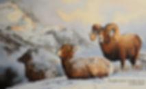 Le Fils de Salomon – Mouflons des Rocheuses, huile sur toile – Tous droits réservés © Gisèle Benoit