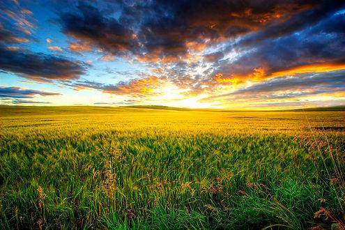 Summer Prairies.jpg