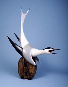 Calling Tern