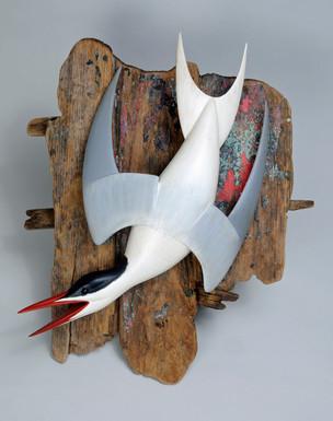 Tern Bombing for Fish