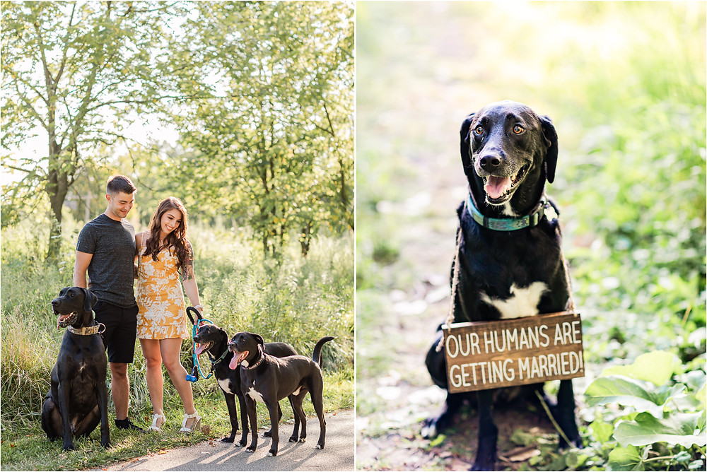 lake-katherine-park-engagement-session-palos-heights-il-engagement-photographer-weddings-dogs-