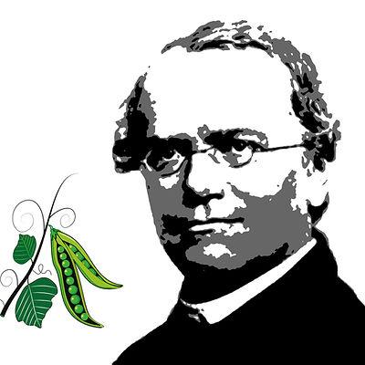 Mendel and peas.jpg