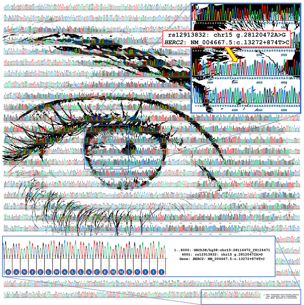 Blue eye v3_artwork_annotations_2000px.j