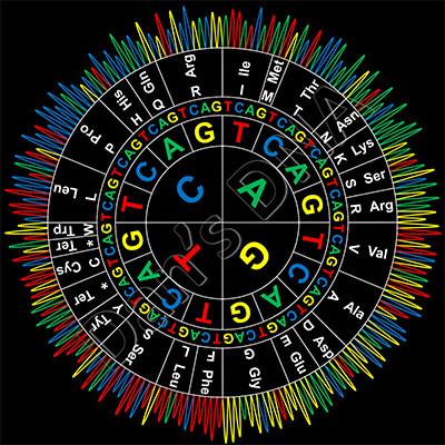 Sanger codon circle_black bg_400px.jpg