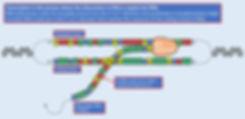 Transcription v3.jpg