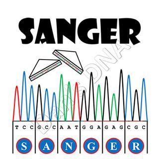 Sanger sandwich