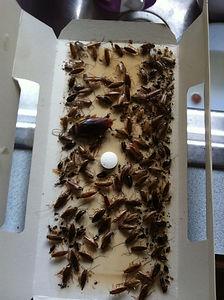 pest control,spider
