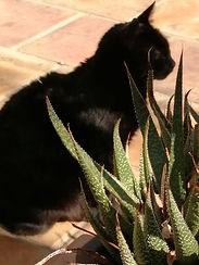 Le chat de La Maison Hilarion animaux de compagnie