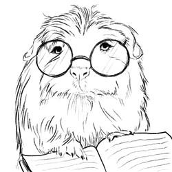 Guinea Pig Reads