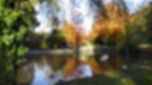 Rylstone  autumn 2.JPG