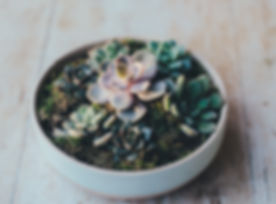 Succulent, family couseling, Tulsa Counseling, Healing