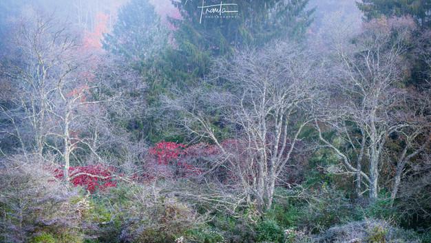 KINKADE'S FOREST