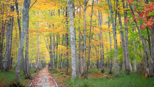 JESSUP PATH IN FALL