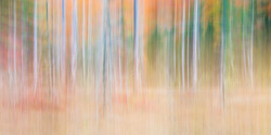 Pharoah Wilderness Abstract No. 7