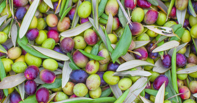 All About Olives: Five Reasons to Eat Them