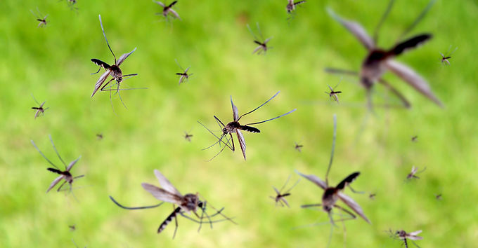 'Dark Moment in History' as GMO Mosquitoes Released in Florida