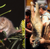 Where's the Aussie spirit? 'Pygmy possum' leaders impose one punishing lockdown after another...