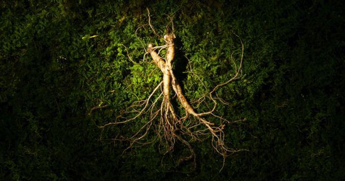 Top Therapeutic Properties of Ginseng