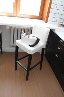 киска на кухне