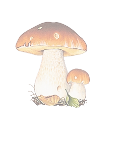 cepes.png