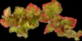 feuilles-vigne-bords.png