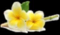 fleurs-jaunes.png