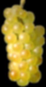 raisins-blancs.png