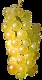 raisins-blancs-petits-d.png