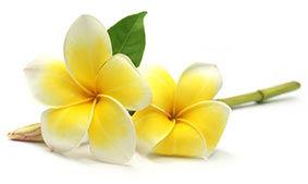 fleurs-jaunes-fb-petites.jpg