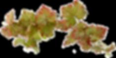 feuilles-vigne-ban.png