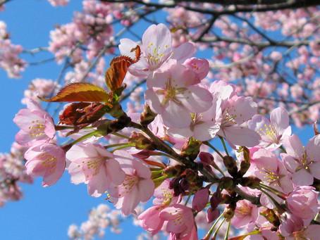 Suivez le printemps