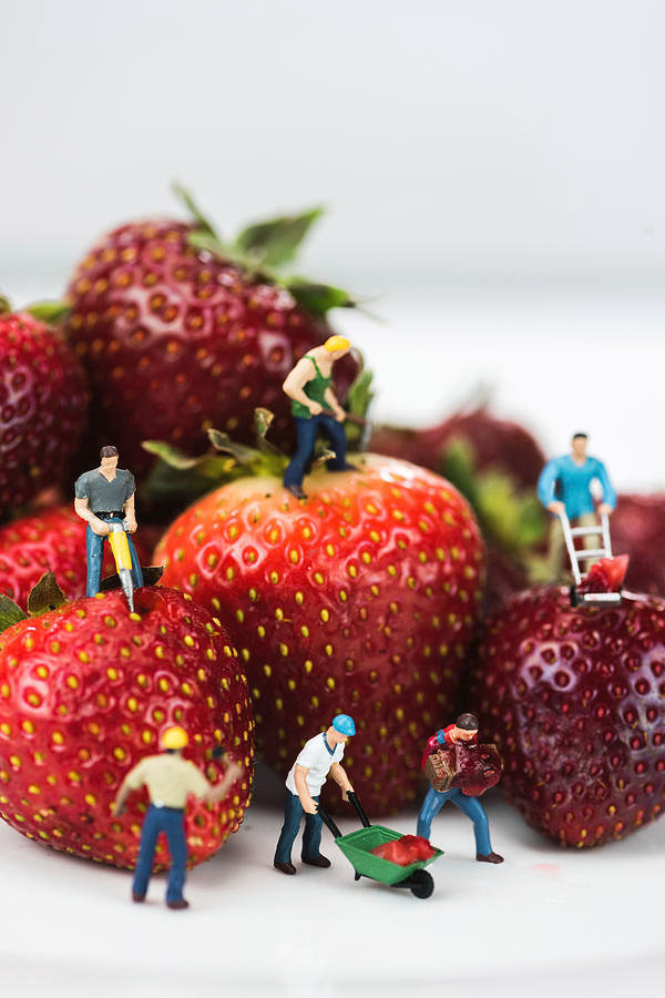 miniature-construction-workers-on-strawb